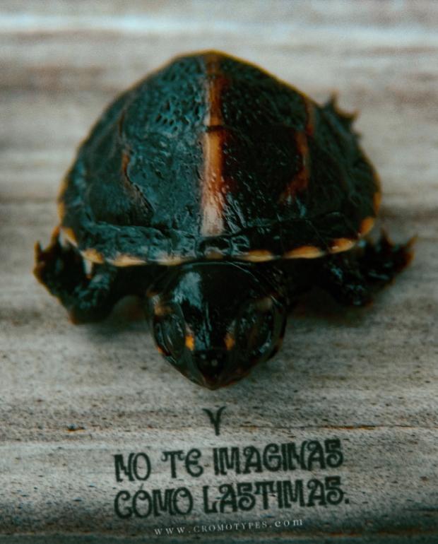Caifan-Tortuga